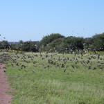 bird-hunting-argentina-001