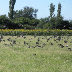 bird-hunting-argentina-002