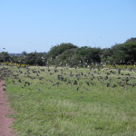 bird-hunting-argentina-013