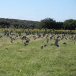 bird-hunting-argentina-014