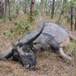 hunting-australia-013