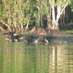 hunting-australia-016