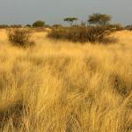 hunting-namibia-031