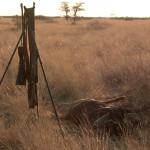 hunting-namibia-032