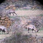 hunting-spain-004
