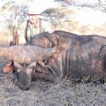 hunting-tanzania-005