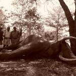 hunting-tanzania-013