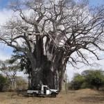 hunting-zimbabwe-027