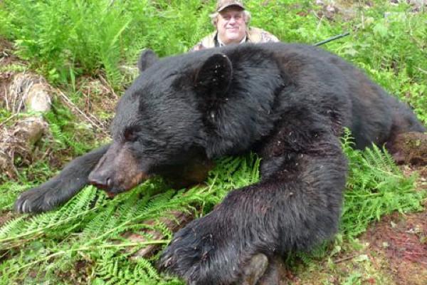 hunt -black-bear