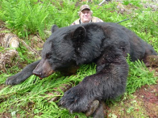 hunt -black-bear