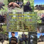 black-bear-hunt-hound