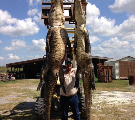 Alligator Hunts Louisiana