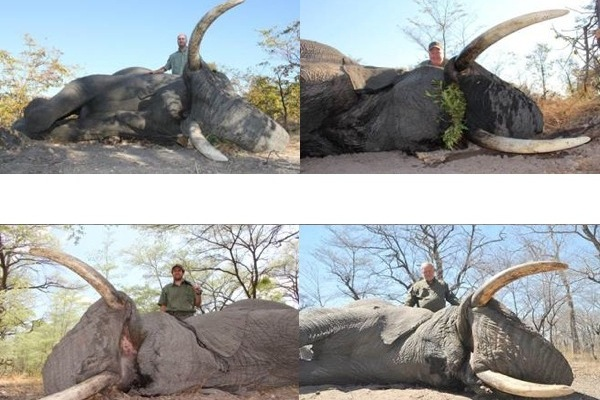 End of Season Deal on Exportable Bull Elephant Hunt Namibia