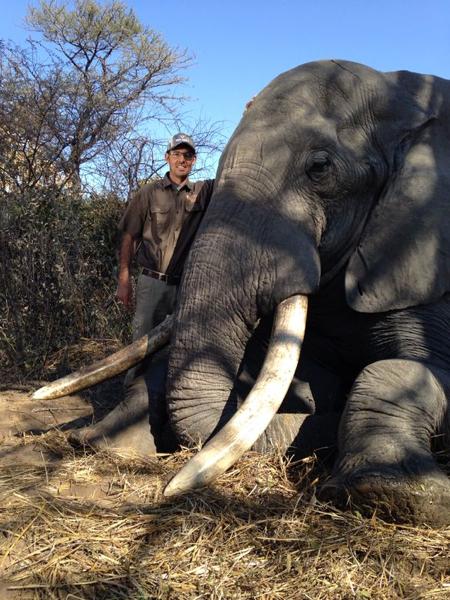 hunt-elephant-zimbabwe