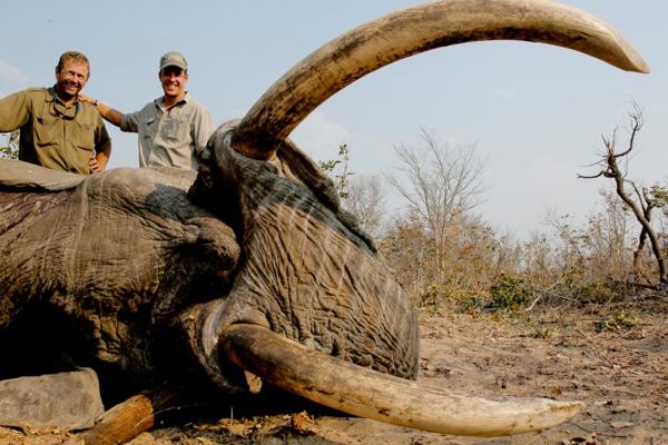 Big Bull Elephant Hunts Zimbabwe Late Season