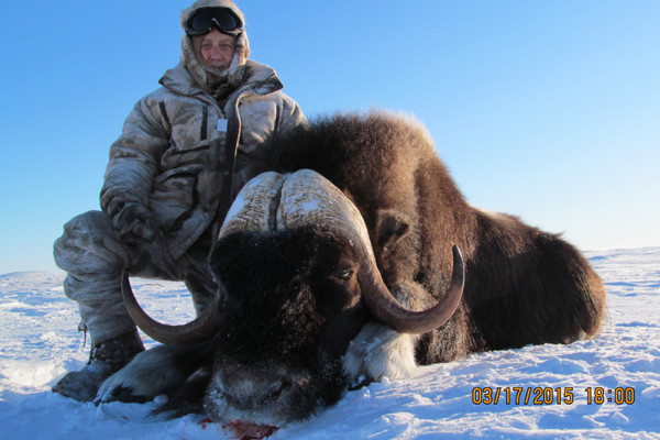Muskox Hunt in Canada with Record Holding Area