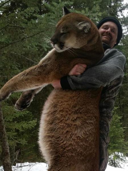 cougar-hunt-canada-02