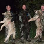 hunt-wolf-canada