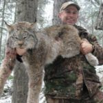 Lynx Hunt British Columbia Canada