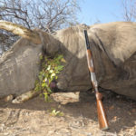 Exportable Elephant Bull Hunt Namibia 2016