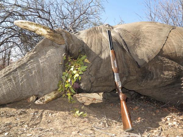 elephant-hunt