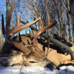 Deer Hunt Discounted Saskatchewan Canada